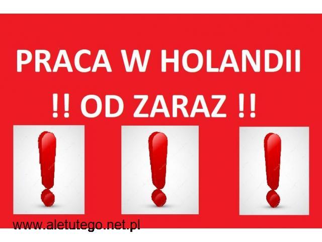 Holandia!! Prace produkcyjne/szklarniowe!! Od zaraz!!